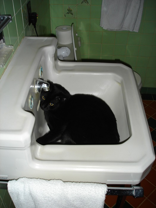 Put the cat in the sink.  I have a sinking feeling.  Supply your own caption.  This is my gift to you, Internet.  Not that it's really feasible to imagine a cat photo would go viral.